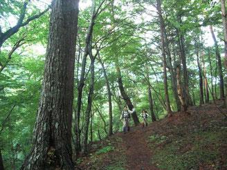 明るい樹林帯を歩く