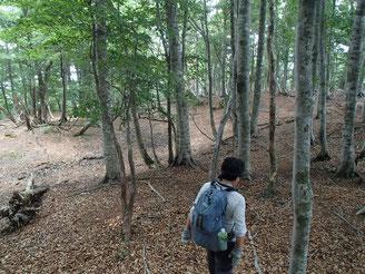 ブナ林の高島トレイルを進み
