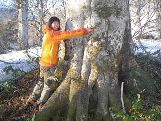 テント場付近のブナの巨樹。直径1m位?