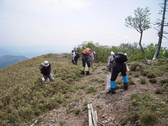 綿向山頂のゴミ拾い