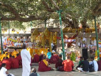 菩提樹下に集う仏教徒