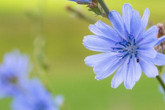 Natur pur, Blühstreifen Moosach bei Grafing
