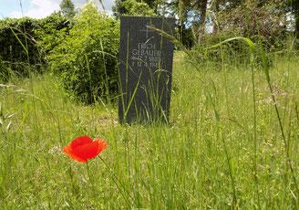 Friedhof Cotta (Dresden) Bild: Susann Wuschko