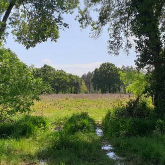 Projet d'habitat participatif à Ondres (40)