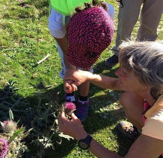 balade du petit naturaliste en montagne ariège pyrenées famille enfants en 1/2 journée