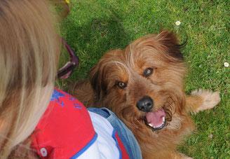 100% individuelle tierärztliche Verhaltenstherapie, maßgeschneidert auf Ihre Situation - das Angebot für den besonderen Anspruch.