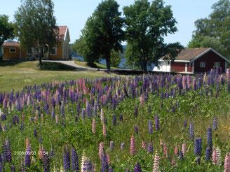 Sommer in Dalsland / Nössemark