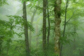 Holz - Baum - Wald