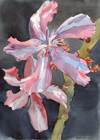 """Oleander """"Kewpie"""", Sophia Brandtner, Oleander Haus, Galveston 2015"""