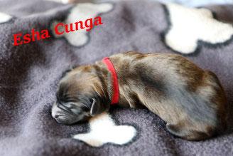 Esha-Cunga - von Allen geliebt