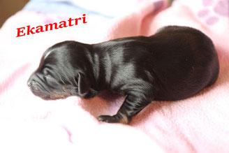 ohne Bändchen...Ekamatri - die einzige Mutter