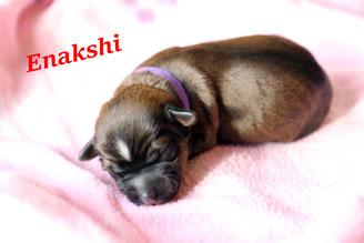 Enakshi - liebe Augen