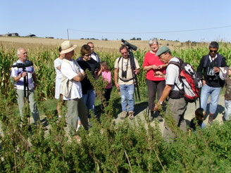 Sortie, nature, ornithologie, botanique, association, tarn