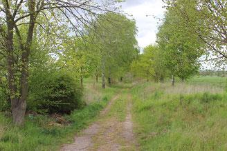 Weg nach Bürgermühle