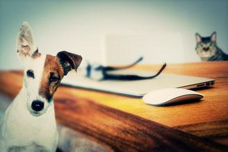 Kontakt zu Anya & Co. Schönes für den Hund