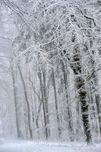 Waldweg bei Schnee