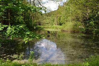 Bild: Teichler Wünschendorf Mühlenteich