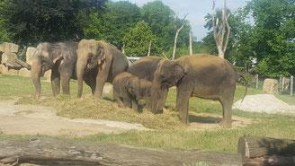 Zoo Praag