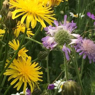 Bijzaak is hoofdzaak. Sponsor bloemen voor bijen