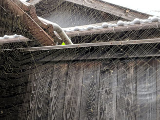 中庭の巨大なクモの巣 芸術作品だわ