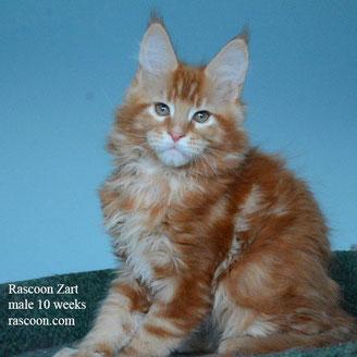 Rascoon Zart