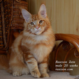 Rascoon Zein