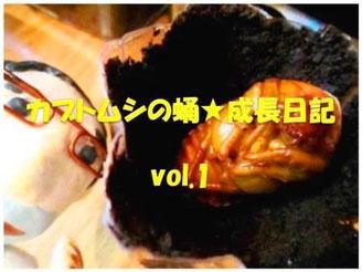 カブトムシの蛹★成長日記vol.1