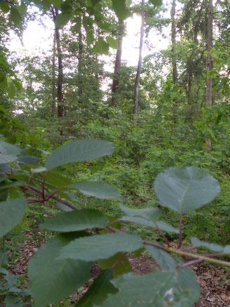 Gesunde Waldluft