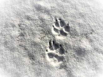 Ich habe meine Spuren hinterlassen, im ersten Schnee des neuen Jahres.