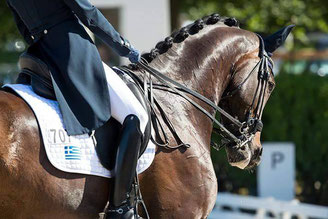 paard wedstrijdklaar, begeleiding sportpaard, grooming, paard keuringsklaar maken