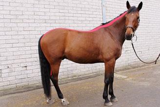 Kinesiology taping paard, sporttape paard