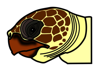 Vista lateral de la cabeza