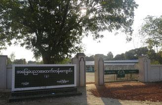 学校の周りには、タナカ(日焼け止 めになる)の木が多い