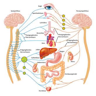 Gewichtsverlust durch autonome Neuropathie