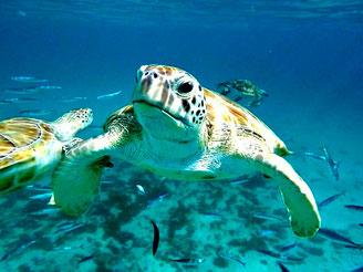 U-Boot, Barbados, Karibik, Karibische Inseln