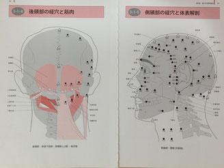 ▲頭部の経穴 (『経穴マップ』医歯薬出版 より)