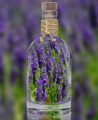 Lavendelöl Lavendel Lavendelblüten