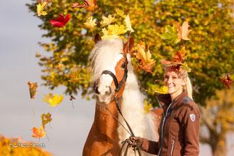 Haflinger Fotoshooting Herbst