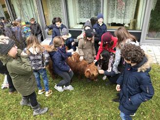 Kinder mit Tieren, Pädagogik, Tiertherapie, Grundschule