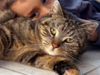 Ein kleiner Junge schmust mit seiner Katze. Vielen Haustierhaltern ist Wissenschaftlern zufolge nicht ausreichend bewusst, dass ihre tierischen Begleiter auch Krankheiten übertragen können. Foto: Patrick Pleul