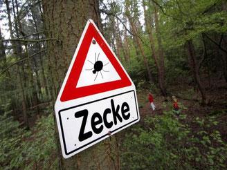 In Deutschland ist die Zahl der Risikogebiete für die von Zecken übertragene Hirnentzündung FSME gestiegen. Foto: Frank Rumpenhorst