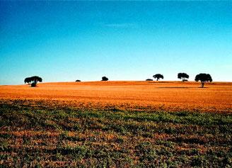 stimmungsvolle Landschaften