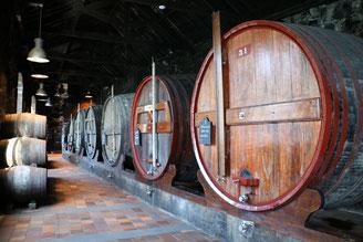 Porto e i suoi vini