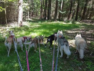 30.05.2021: schattiger Spaziergang im Wald