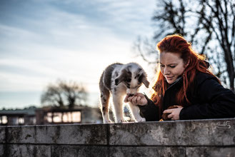 Therapiebegleithund Berlin/souldogs-berlin/hundeausführservice/hundeshop