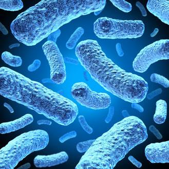 Bakterien unter dem Mikroskop vergrößert