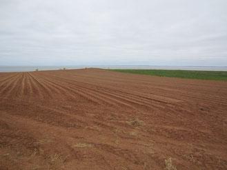 Kartoffelfelder