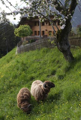 Wildkräuter-Kurse in der Natur, bei Fuchs und Hase im Emmental, Claudina Schmid