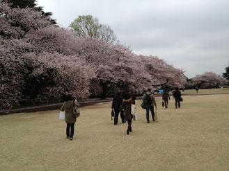 2013花見の宴・御苑