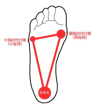 足裏の図(かかとに50%、親指の付け根に35%、小指の付け根に15%の体重がかかります)
